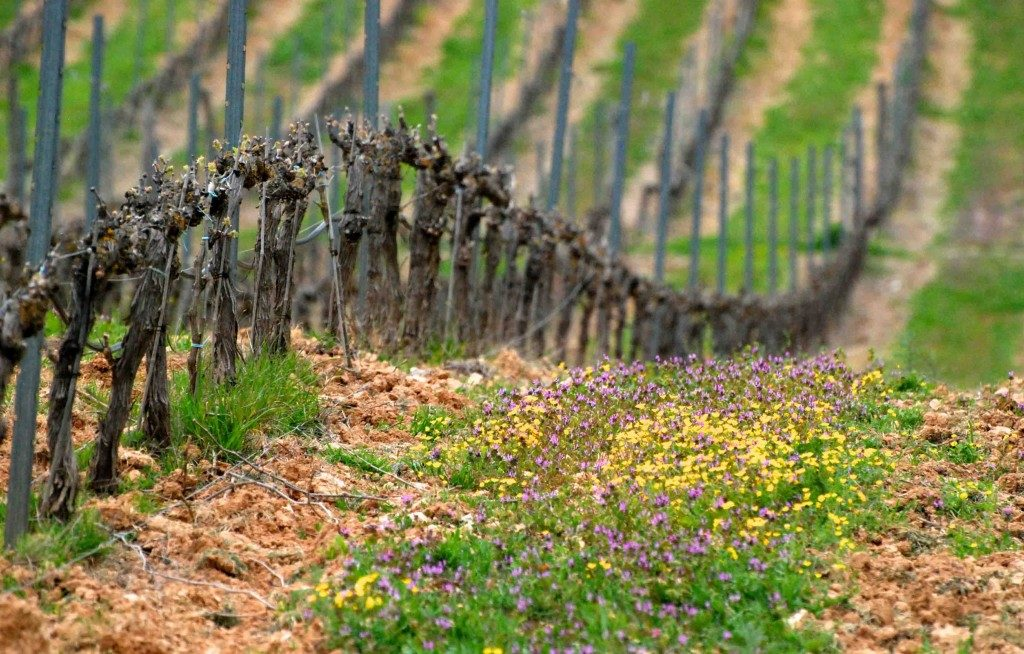Privilégier les machines parfaitement adaptées pour la viticulture