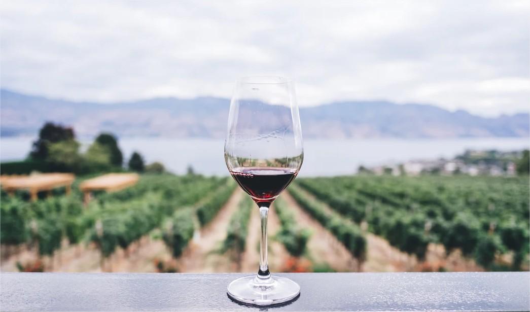 Les vignobles de GC Lurton Estates