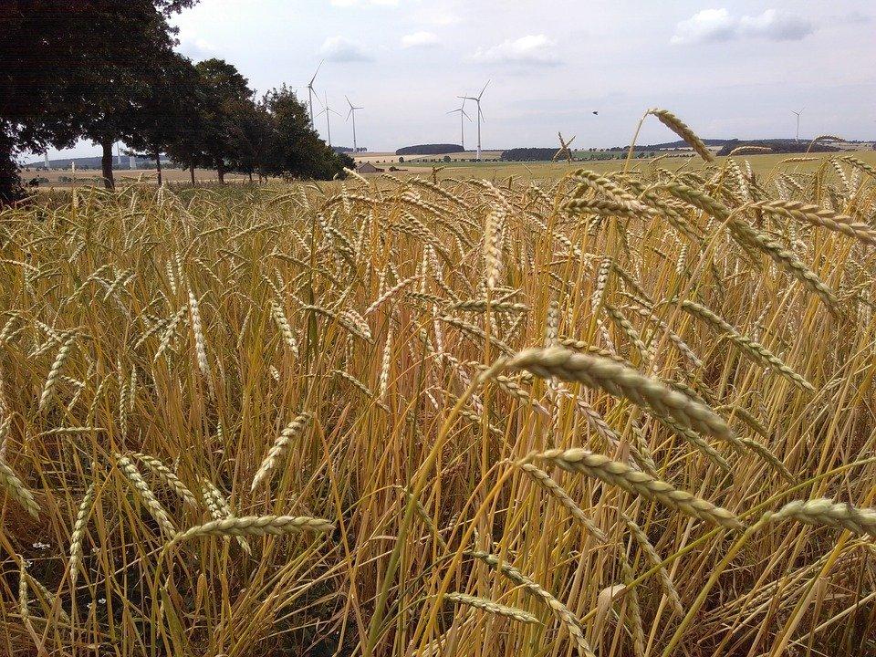 Quels sont les bienfaits de la farine d'épeautre ?